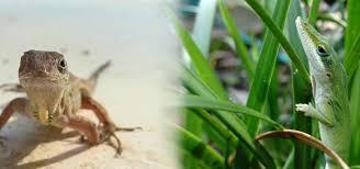 lizards4 jpg