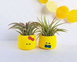 pineapple air plant planters cute planter indoor planter