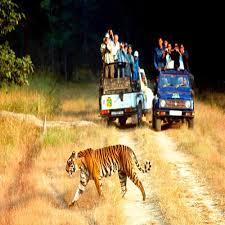 wildlife tours images Wildlife tours wildlife tour packages in nagpur jpg