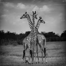 urszula kozak authentic africa wildlife photographer
