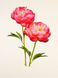 beautiful flower images the most beautiful flowers
