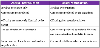 sexual reproduction in flowering plants biology4isc