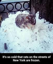 Ny Memes - rats streets of ny meme by alexdgr8est memedroid