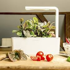 amazon com click u0026 grow indoor smart fresh herb garden kit with