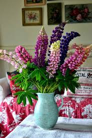 the 25 best lupine flowers ideas on pinterest cottage gardens