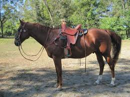 sentry saddle testimonials