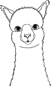 best 25 llama drawing ideas on pinterest llamas random quotes