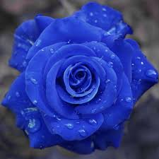 Images Of Pretty Flowers - blue roses flowers pictures flowers wallpapers red roses