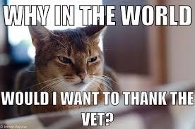 Vet Memes - skeptical cat on veteran s day meme weknowmemes
