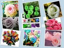 White Roses For Sale Popular Black Roses For Sale Buy Cheap Black Roses For Sale Lots