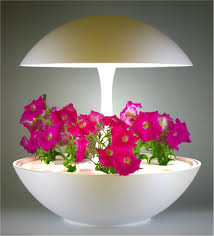 plants that don t need sunlight to grow welcome to akarina
