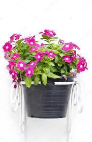 Vinca Flowers Vinca Flowers Hanging Pot Plant U2014 Stock Photo Happymay 39943715