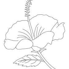 coloring pictures of hibiscus flowers hibiscus coloring pages hibiscus flower coloring page vitlt com