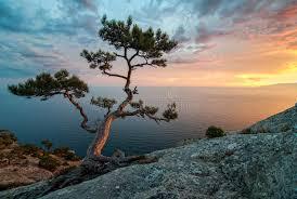 imágenes asombrosas naturaleza naturaleza asombrosa de crimea ucrania mar rocas y pinos foto de