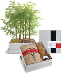 grow your own bonsai forest kit redwood