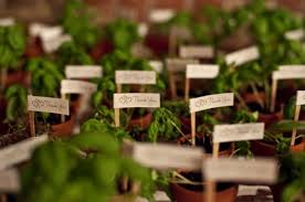 plant wedding favors wedding favors potted plants