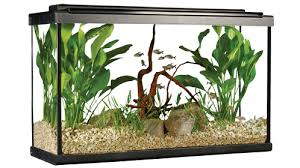 Aquarium Decor Ideas Top 7 Aquarium Decorating Tips Home Aquarium Tips Explore Fluval