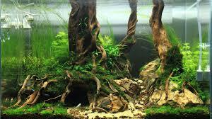 Aquascape Decoration Aquascaping Bring Nature Inside Home Ideas