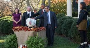 national thanksgiving turkey the presidential turkey pardon the most awkward tradition in