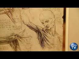 Leonardo Da Vinci Human Anatomy Drawings Leonardo Da Vinci The Scientist New Show Reveals Anatomy Of A