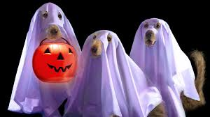 halloween pumpkin backgrounds desktop funny halloween wallpapers u2013 festival collections