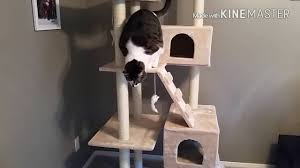 Cat Trees For Big Cats Cat Tree Assembly Youtube