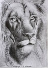 lion face sketch by snowwhirls on deviantart