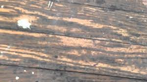 how to identify wood floors in old houses youtube