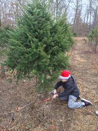 How To Trim A Real Christmas Tree - the road so far be the change you wish to see in the world