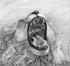 lion pencil drawing designs creativetemplate net creative template