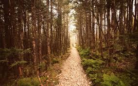 woods wallpaper qygjxz