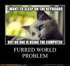 1st World Problems Meme - first world problems meme lolcat edition hahaha geek