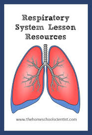 Human Anatomy Respiratory System 101 Best Images About Human Body For Kids On Pinterest