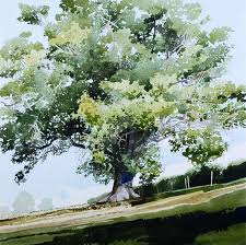 425 best wc trees images on watercolors watercolours