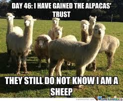 Alpaca Meme - llama alpaca surfing memes best collection of funny llama