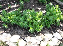 organic a round rock garden page 16