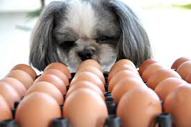 Challenge Harmful Egg Challenge Is A Less Harmful Than Tide Pod Challenge