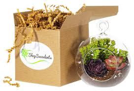 Amazon Succulents Amazon Com Shop Succulents Mini Succulent Container Design Patio