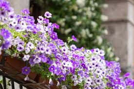 cura giardino cura giardino no balcone donnad