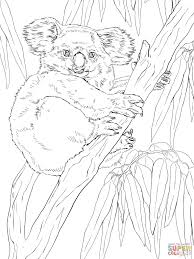 koala on eucalyptus tree coloring page free printable coloring pages