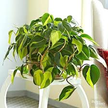house plants that don t need light plants that don t need sun indoor plants dont need sunlight tmrw me