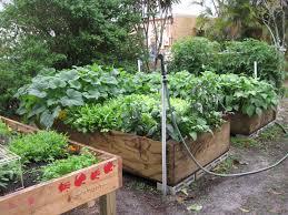 soil for raised vegetable garden home decorating interior