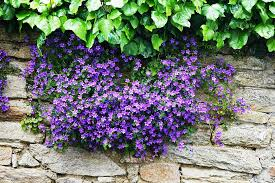 Purple And Blue Flowers Free Photo Campanules Flowers Field Purple Free Image On