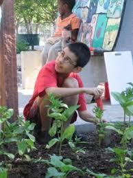 Urban Garden Denver - denver urban gardens free seeds and transplants group