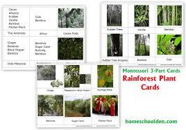 native rainforest plants rain forest plants free montessori 3 part cards homeschool den