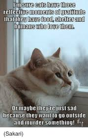 Gratitude Meme - im sure cats have those reflective moments of gratitude that they