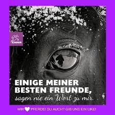 pferdesprüche 76 best images on