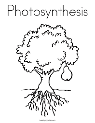 Photosynthesis Coloring Page Twisty Noodle Photosynthesis Coloring Page