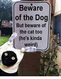 Dog Cat Meme - beware of the dog but beware of the cat too he s kinda weird cats