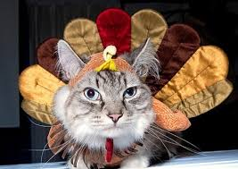 thanksgiving kitteh of teh day happy thanksgiving do i look